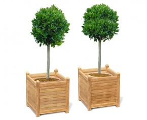 Set of 2 Zen Extra Large Garden Planters, Teak Wood